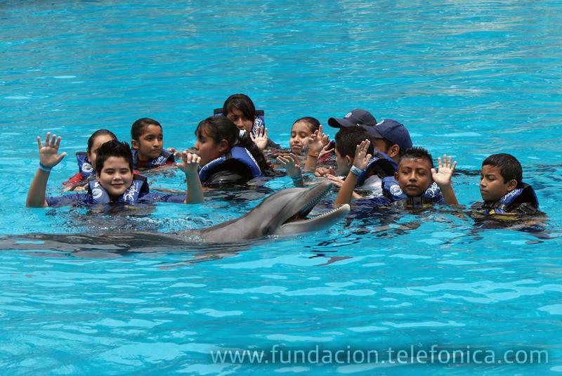 Natación con delfines en Six Flags.