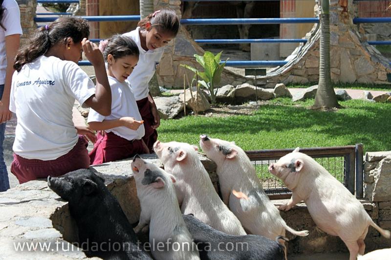 Fundación Telefónica reconoce el desempeño de los niños Proniño con visita a Expanzoo.