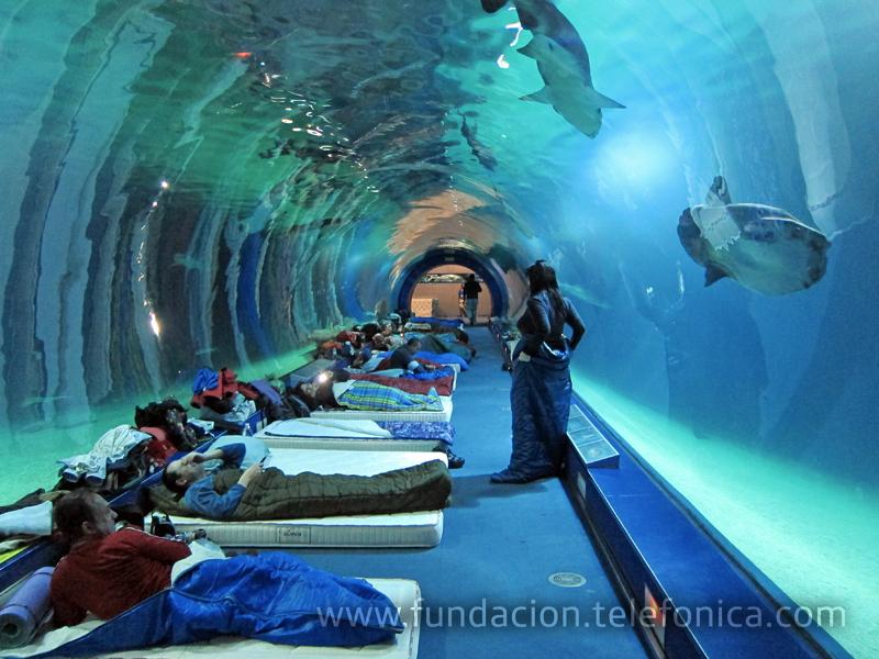 Un grupo de personas con discapacidad participaron en el Oceanográfico de Valencia en un proyecto de Voluntarios Telefónica.