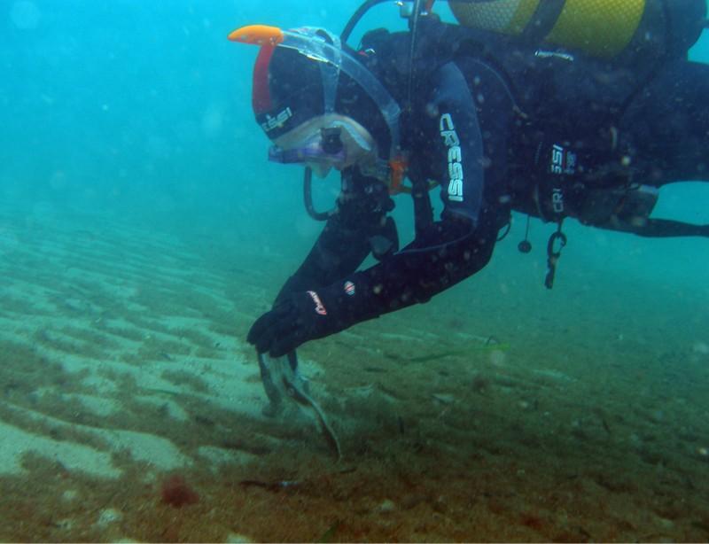 Un grupo de Voluntarios Telefónica van a colaborar en la limpieza del Monumento Natural Arrecife Barrera de Posidonia, en Aguadulce (Almería)