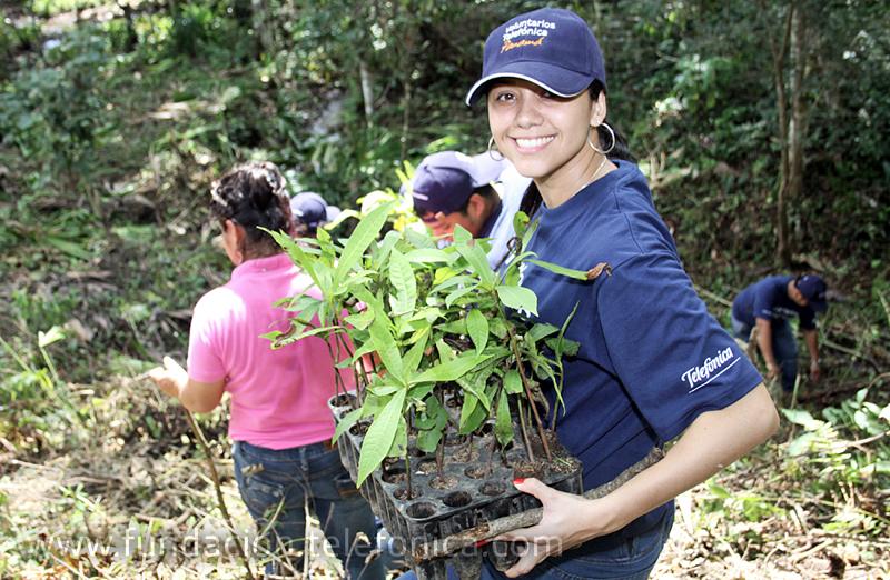Los Voluntarios de Telefónica plantaron 280 árboles en una jornada que se desarrolló en la provincia de Herrera.
