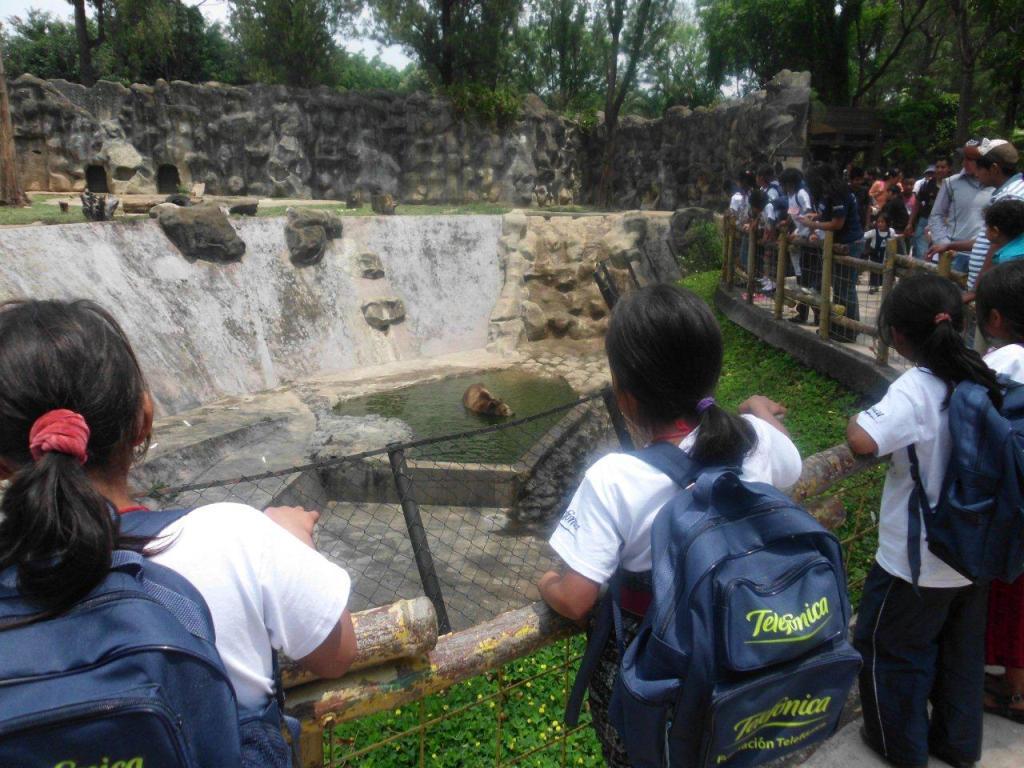 Los niños disfrutaron del baño de los osos
