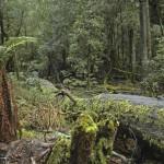 Mt. Field, Tasmania, 2004. ©VWD