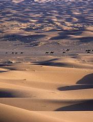 Okaimal: desierto de Zagora, Marruecos