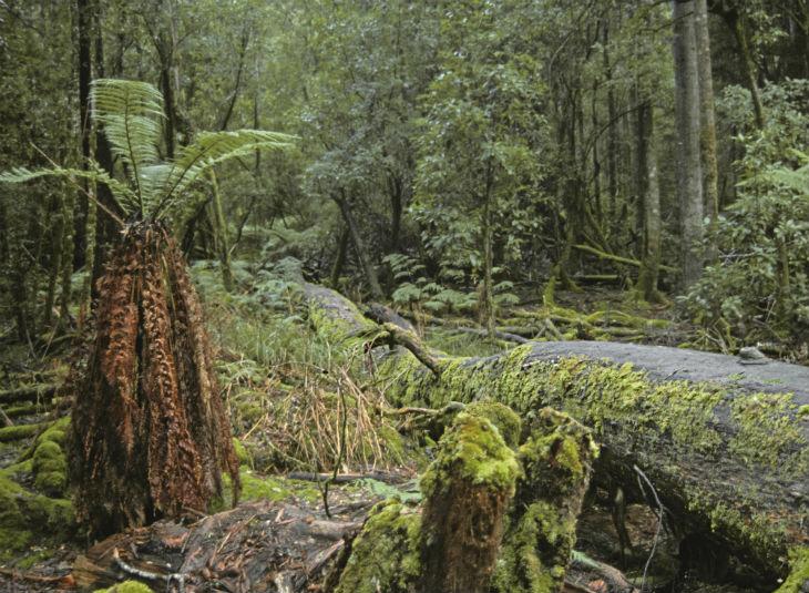 Mt. Field Tasmania ©Okaimal